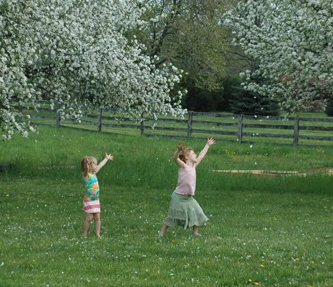 Apple blossom time sm