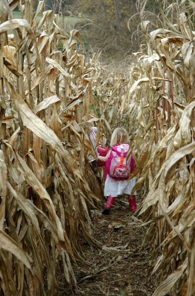 Running_through_corn